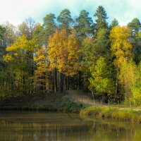 Река лесная :: Александр