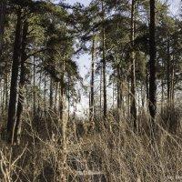 Весенний лес :: Demure Nastya Голубева