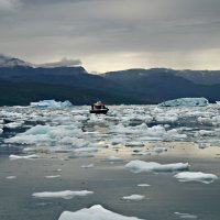 Пробираясь между льдинами :: Tatiana Belyatskaya
