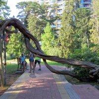 Дерево :: Вера Щукина