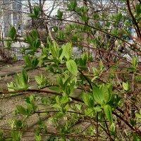 Весна из нашего двора.  Апрельские радости :: Нина Корешкова