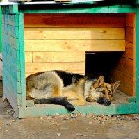 Набегался,спит,хитрец :: Елена Фалилеева-Диомидова