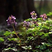 спокойная красота весны :: юрий иванов