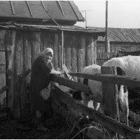 Домашние хлопоты :: Виктор Сухрников
