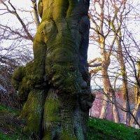 """Дерево в парке: """" Не слон! Сколько повторять? Просто такое дерево!"""" :) :: Nina Yudicheva"""