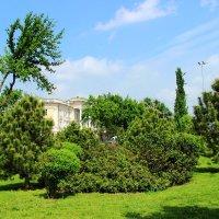 Ташкент, в сквере :: Светлана
