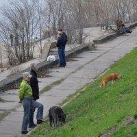 Весенний выпас собак :: Виталий К