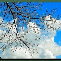 весна. ветка. облака. :: Ivana