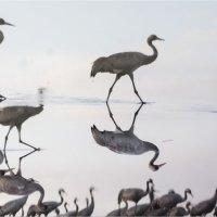 Журавлиное Озеро :: Борис Аарон