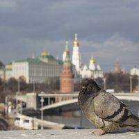 Замышляя заговор.. :: Angeline VukOlova