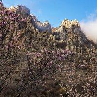 Весна на Демерджи :: Александр Хорошилов