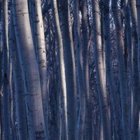 голубой лес :: Алексей Романенко