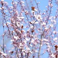 Кружево весны :: Balakhnina Irina