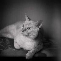 Жизнь кота- маята.. :: Ольга Истомина