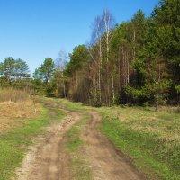 В солнечный апрель поверила дорога... :: Лесо-Вед (Баранов)
