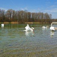 Лебединное озеро... :: Galina Dzubina
