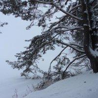 зима :: Александр Матюхин