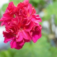 Мой цветочек расцвёл :: Павел Серов