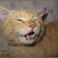 Рыжие кошки тоже бывают с конопушками!!))))))))) :: Людмила Богданова (Скачко)