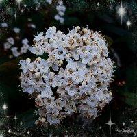 Весны цветение :: Nina Yudicheva