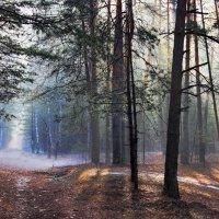 Апрельский солнечный туман искрится невесомой влагой... :: Лесо-Вед (Баранов)