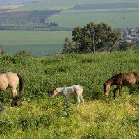 кони на природе :: Александр Деревяшкин