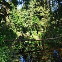 Берендеев лес летом :: Paparazzi