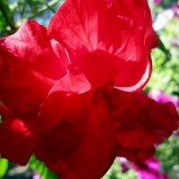 Аленький цветочек :: ivolga
