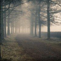 Утро туманное... :: Miro Forja