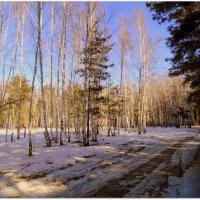 Весна в лесу. :: Мила Бовкун
