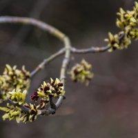 А весна идёт... :: Владимир Кроливец