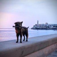 Кубинская собачка :: Arman S