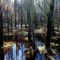 лучи солнца в весеннем лесу :: Александр Прокудин