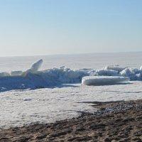 На берегу Финского залива :: Маера Урусова