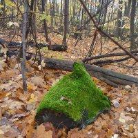 Зелёный пень в весенний день :: Виктор Куприянов
