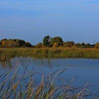 На берегах реки Утка :: Евгений Агудов