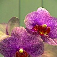 Ноябрьское цветение :: Сергей Карачин