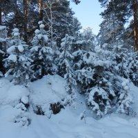 В зимнем наряде :: Владимир Звягин