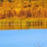Краски осени. :: Andrey Nemo