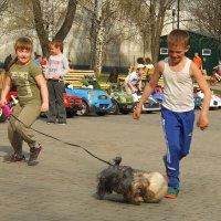 Голевая передача :: Наталья Тимошенко