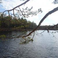 Сосны у озера :: BoxerMak Mak