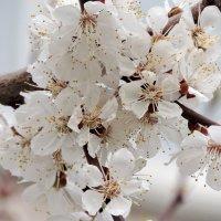 весна :: Люба Вылывана