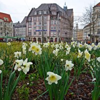 Весенний Аугсбург-Весенний город пахнет счастьем... :: Galina Dzubina