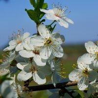 Весна. :: владимир