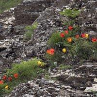 Весна в горах :: Александр Грищенко