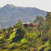 На холмах Калифорнии :: Николай Танаев
