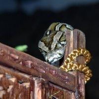 Змей искуситель :: Алексей Шеметьев