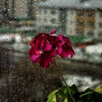 Первый дождь... :: Виктор Коршунов