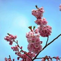 Краса весны ... :: Владимир Икомацких