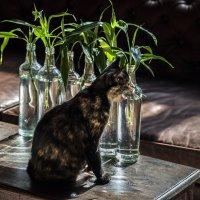 кошка на фоне китайского бамбука :: Александр